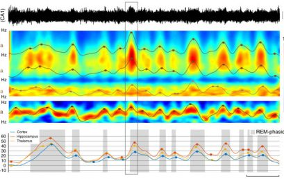 Our latest publication in Nature Communication